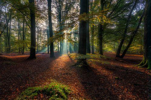 Herfst licht von Dennisart Fotografie