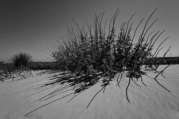 Plant on the beach on the island of Terschelling von Leon Doorn