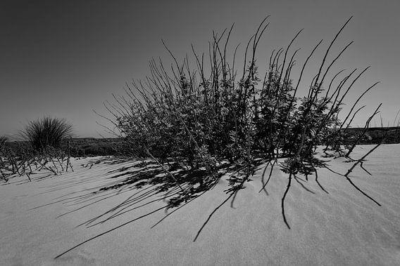 Plant in de duinen van Terschelling van Leon Doorn