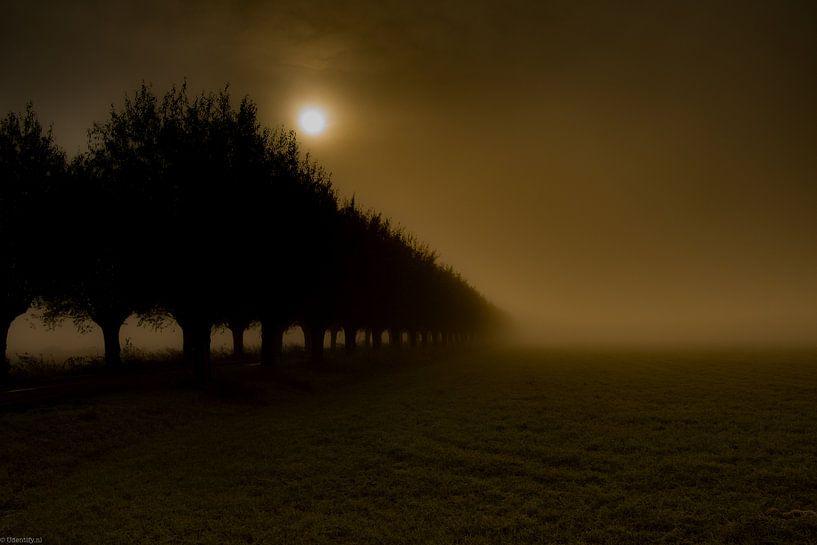 Foggy Morning van Arjen Uijttenboogaart