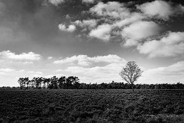 Der einsame Baum - schwarz-weiße Landschaftsfotografie von Linsey Aandewiel-Marijnen