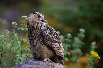 Uhu ( Bubo bubo ) hockt in der Dämmerung auf einem Felsen und schaut sich um, wildlife, Europa. von wunderbare Erde