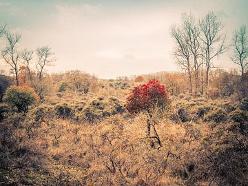 Heiden landschap van Martijn Tilroe