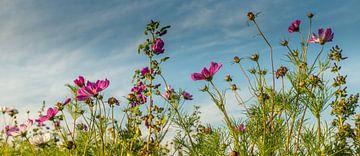 Wilde bloemen veld! van Robert Kok