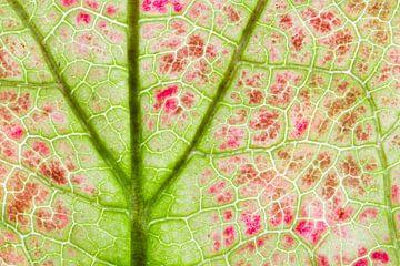 Een boom in een blad van Carol Thoelen