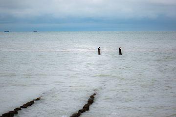deux cormorans à l'extrémité sur Tania Perneel