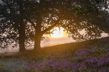 zon onder de bomen van Tania Perneel