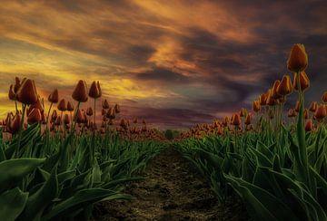 Tulpen bij zonsondergang van Mario Calma