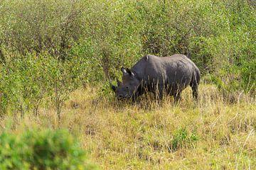 Zwarte neushoorn in Kenia. van Monique van Helden