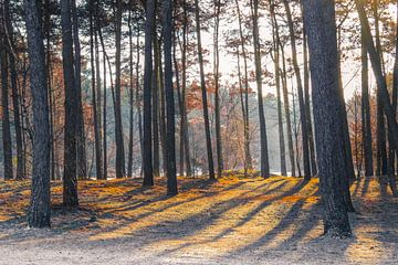 Veluwse bos van Silke bakker