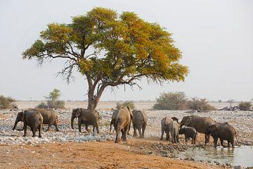 Olifanten konten  van Dexter Reijsmeijer