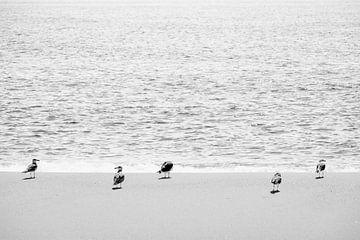 Sanderling Vögel am Strand in Portugal von Evelien Oerlemans