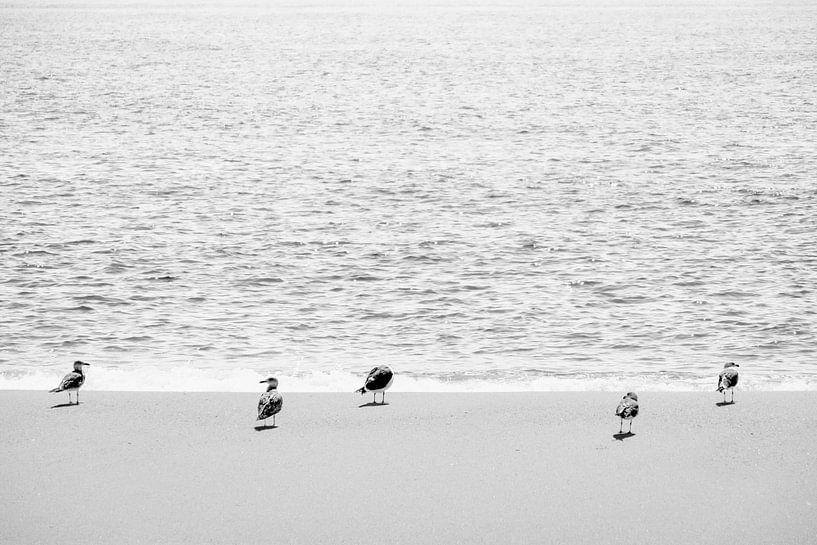 Drieteenstrandloper vogels op het strand in Portugal van Evelien Oerlemans