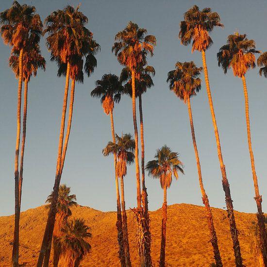 Ochtendgloren in Palm Springs van Michael van Eijk