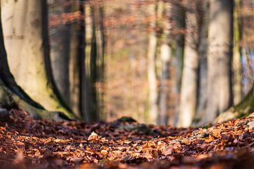 Waldgebiet von Tania Perneel