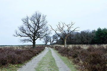 Deelerwoud, Veluwe Gelderland