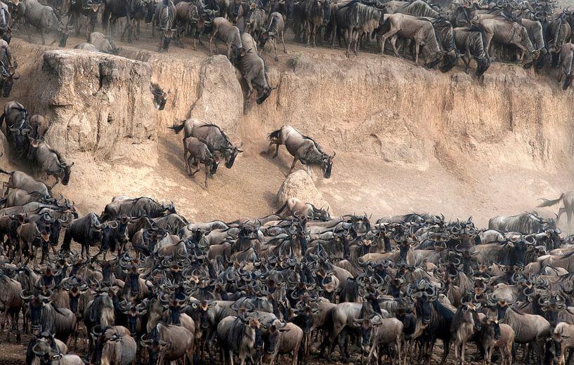 Des gnous traversent la rivière Mara pendant la migration. sur Louis en Astrid Drent Fotografie