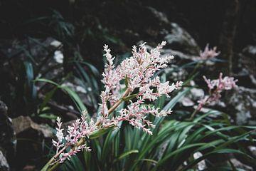 Blumen von Ennio Brehm
