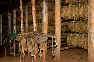 Tabaksschuur in Cuba van Margot van den Berg