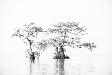 Twee cypressen in het moeras in het water