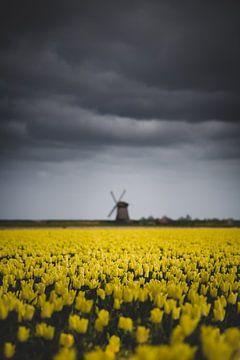 Wolken, Windmühle und Tulpen von Frank Verburg