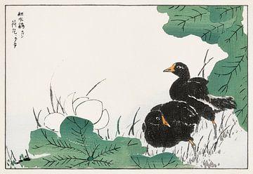 Illustration von Blässhuhn und Lotus von Numata Kashu von Studio POPPY