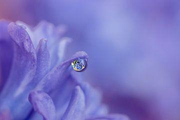 Macro opname hyacint van Fronika Westenbroek