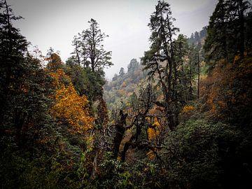 Herfst op Hoogte van Rik Pijnenburg