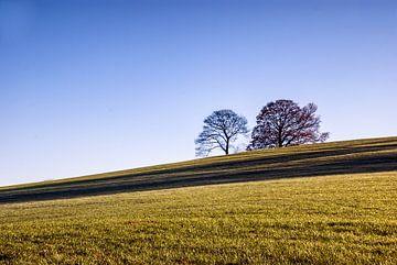 Bomen op de Heuvel van Manuel Declerck