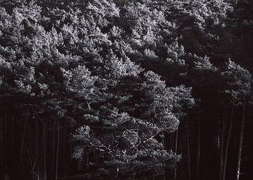 Bäume #4 von Márton Gutmayer