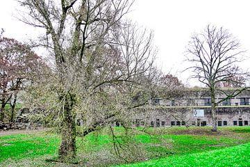 Fort bij Vechten - Boom detail voor fort van Wout van den Berg