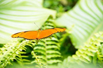 Farfalla arancione van Yvonne van Zuiden