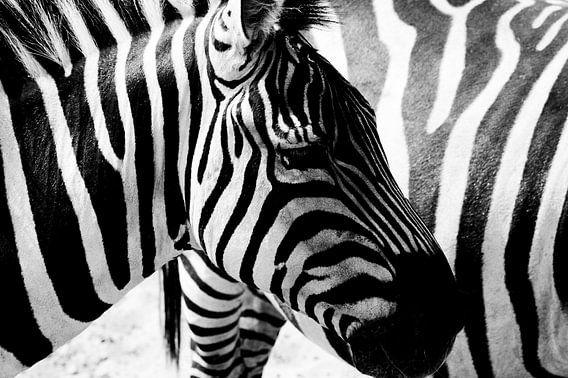 Zebra strepen van Nico van der Vorm