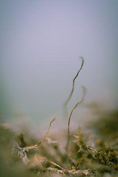 Korstmos op een groene ondergrond tegen een blauwe achtergrond.  van Robert Wiggers