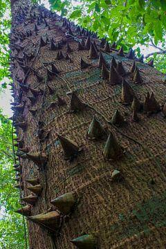 Dodelijke boom sur Stijn de Jong