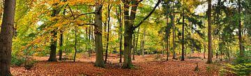 Herbst in der Lage Vuursche von Corinne Welp