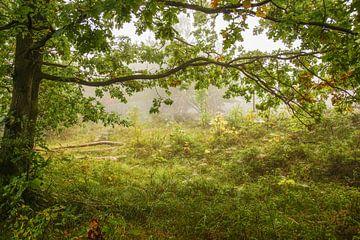 Doorkijk in het bos sur