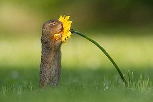 Eekhoorn ruikt aan bloem