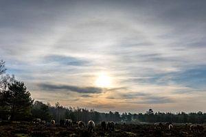 Paarden op de Plantage Willem III van Jacques Jullens