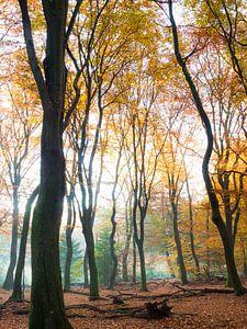 Gouden kleuren in het bos van