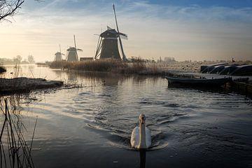 Schwan schwimmt in einem Strom in einer Winterlandschaft mit Windmühlen von iPics Photography