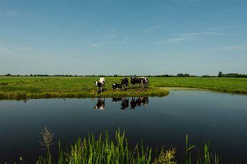 Koeien aan het water van Brian Morgan