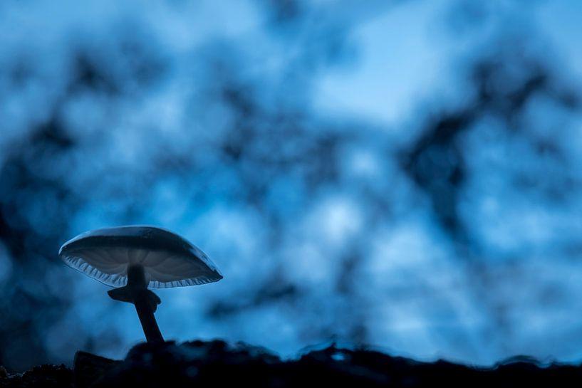 Porseleinzwam in blauw van Erik Veldkamp