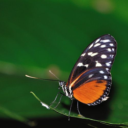 Vlinder op de uitkijk van