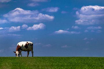 Eenzame koe op hoogte, een typisch Nederlands plaatje van Heleen van de Ven
