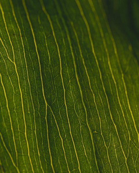 Groene nerven #3 van Jeffrey Hoorns
