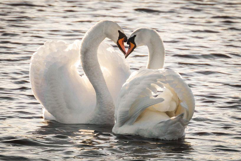 Liefde is... van Hermen van Laar