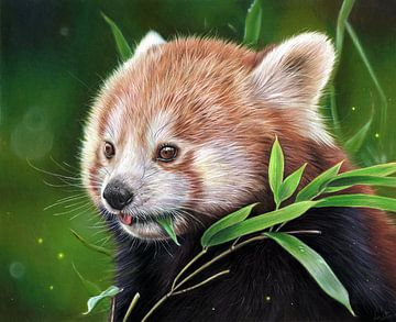 Panda rouge sur Leontine van Vliet