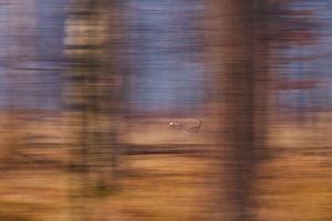 Vluchtende reeën door het bos van Verrassende Fotografie