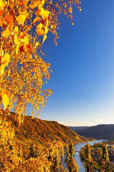 Herbstliche Landschaft an der Mosel in Deutschland